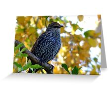 I Stand Out In Autumn Colours - Starling - NZ Greeting Card