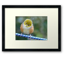 A Silver Halo Helps The Contemplation Process!!! - Silver-Eyes - NZ Framed Print