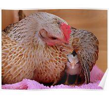 Ahhh.. My Little Sleeping Beauty - Silver-Duckwing - NZ Poster