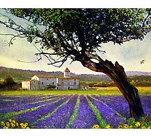 lavender fields and chalet at sunset Photographic Print