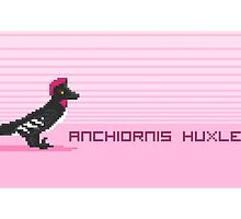 Pixel Anchiornis by David Orr