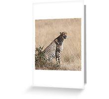 Cheetah, Maasai Mara, Kenya Greeting Card