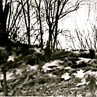 Blurred Foliage by bengel
