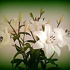 Lilies 3. by Bette Devine