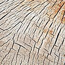 Cracks in wood, textures 59 by Dave Hare