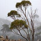 Fog, Mt Wellington, Tasmania Australia by Sandra  Sengstock-Miller