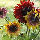 Sunshowers by Judy Olson