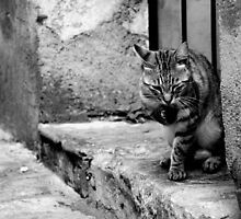 Ravello Cat by simonday