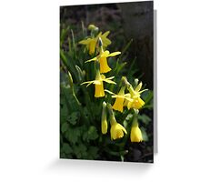 Cluster of Daffodils Greeting Card