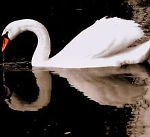 Swan lake by MEV Photographs