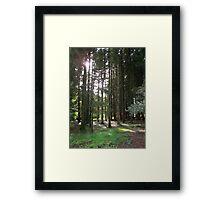 Sunlight Through the Trees at Blarney Castle  Framed Print
