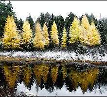 First Snow on a Tamarack Bog by Wayne King