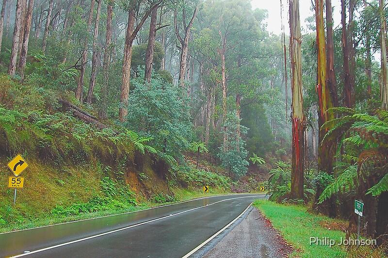 Marysville Australia  city pictures gallery : Road Runs Through It, Marysville, Victoria, Australia