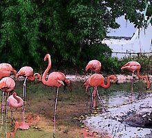 Pink Flamingos by rasama