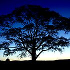 Tree Silhouette by Mark Andrew Turner