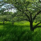 Apple Meadow by Mistral Hill  Photography