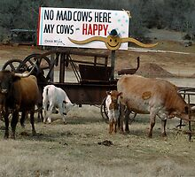 No Mad Cows by Dennis Jones - CameraView