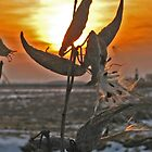 Milkweeds at sunset by Lorale