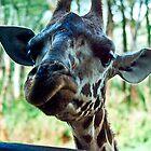 cool giraffe by elleboitse
