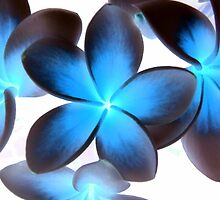 Frangipani Black and Blue by KellieBee