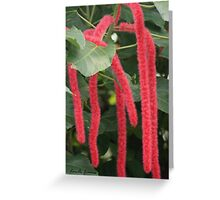 Red Hot Cat Tails Greeting Card