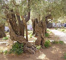 Garden of Gethseme  (Israel) by Ann Palmieri
