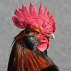 Rooster by Jenifer