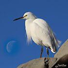 Egret by Jenifer