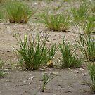 grass by xXDarkAngelXx