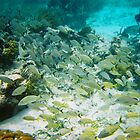 Cozumel Underwater by Cathy Jones