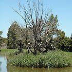 the tree of birds by Melanie Atkins