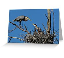 Great Blue Heron with Babies - Ottawa, Ontario Greeting Card
