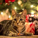 Christmastime Fun by Mikell Herrick
