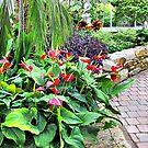 Greenhouse Path by Monnie Ryan