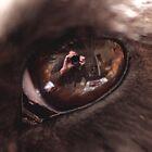 Ozzie's eye by gordy