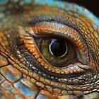 Iguana eye by gordy