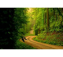 Low Gap Road  Photographic Print