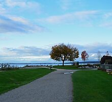 Beautiful crescent beach in late summer in White Rock, BC. Landscape picture of green grasses, blue sky, early fall yellow leaves tree and sea.  by naturematters