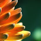 Red hot poker by Kieran  Connellan