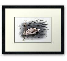 brown feathers swan Framed Print