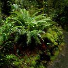 South Island rainforest New Zealand by Sandra  Sengstock-Miller