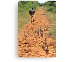 Ostrich Family - Running after Mom. Canvas Print