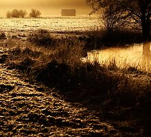 24.2.2014: One Spring Morning by Petri Volanen