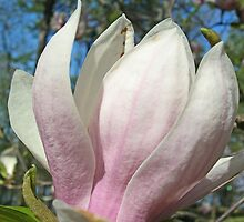 Purple Magnolia Vertical by mwfoster