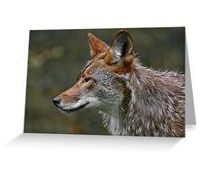 Coyote Profile Greeting Card
