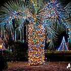 Christmas Palm Tree by imagetj