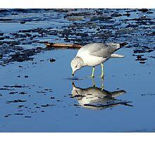 River Gull Photographic Print