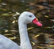 102014 goose 1 by pcfyi