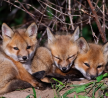 Fox Kits 8 Sticker