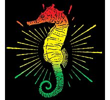 Seahorse with Reggae Music Flag Colors! Photographic Print